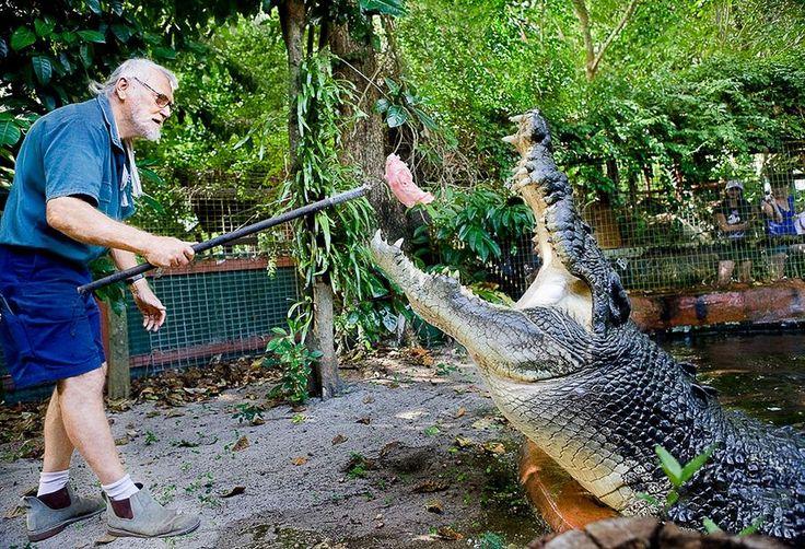 КаКАССИУС КЛЕЙ - САМЫЙ БОЛЬШОЙ КРОКОДИЛ В МИРЕ. (8 ФОТО)   В конце мая самый крупный в мире крокодил Кассиус Клей отметил свой 110-й день рождения. Подарком для него стал 9 килограммовый торт из кур. В 2011 году Кассиус Клей был включен в Книгу рекордов Гиннесса как самая большая рептилия живущая в неволе.  Читать всё: http://avivas.ru/topic/kassius_klei_samii_bolshoi_krokodil_v_mire.html
