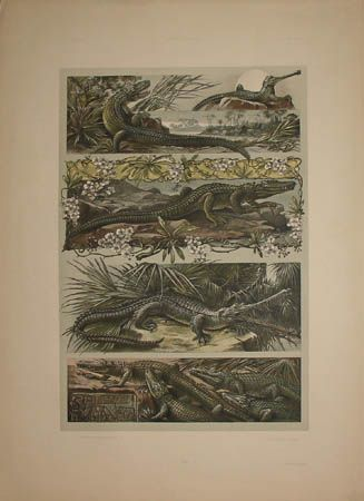 Art Nouveau Alligators by Anton Seder from Das Thier in der Decorativen Kunst, Vienna: 1896-1909, a sourcebook intended to provide inspiration for designers of fabrics, wallpaper, ceramics, book illustrations, posters and advertisements.
