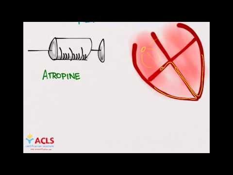Pediatric Advanced Life Support (#PALS) Medication Part One whiteboard video lesson by the #ACLS Certification Institute. Our PALS training series covers everything you need to know to pass your PALS course. Visit us online at http://www.aclscertification.com for more free material or subscribe to the #ACLSCertificationInstitute Youtube channel at http://www.youtube.com/aclsinstitute #BLS #nurse #doctor #emt #paramedic #premed