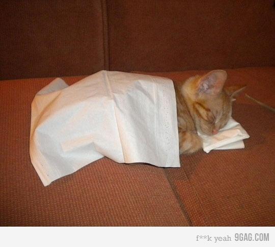 meeowwzzzzSleepy Kitty, Funny Cat, Night Night, Sweets Dreams, Cat Naps, Sleep Tights, Naps Time, Nighties Night, Animal