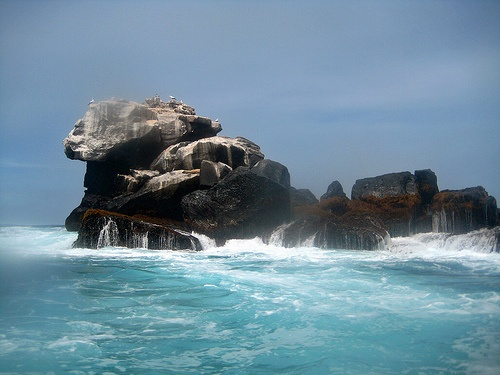 Best 89 All Things Galapagos Images On Pinterest Travel