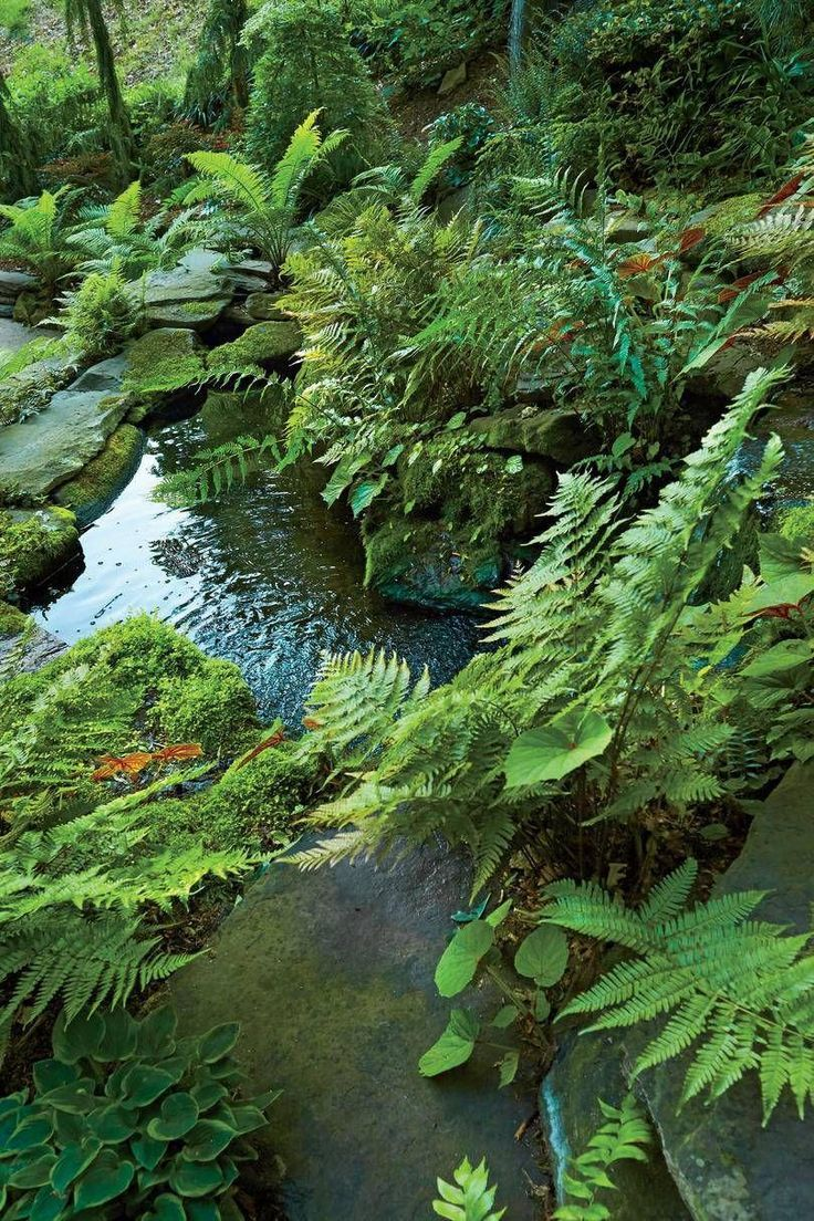 Our Favorite Ferns For Thriving In The Southern Heat In 2020 Ferns Garden Pond Plants Pond Landscaping