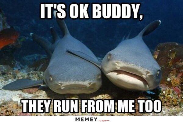 Shark Memes | Funny Shark Pictures | MEMEY.com