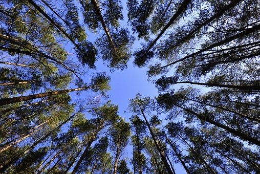 Erdők, Sky, Lombozat