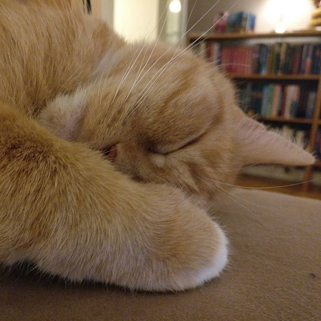 The#cat is taking a paws
