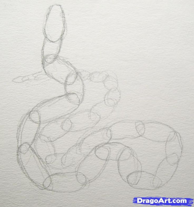 How to Draw a Realistic Snake, Draw Real Snake, Step by Step ...