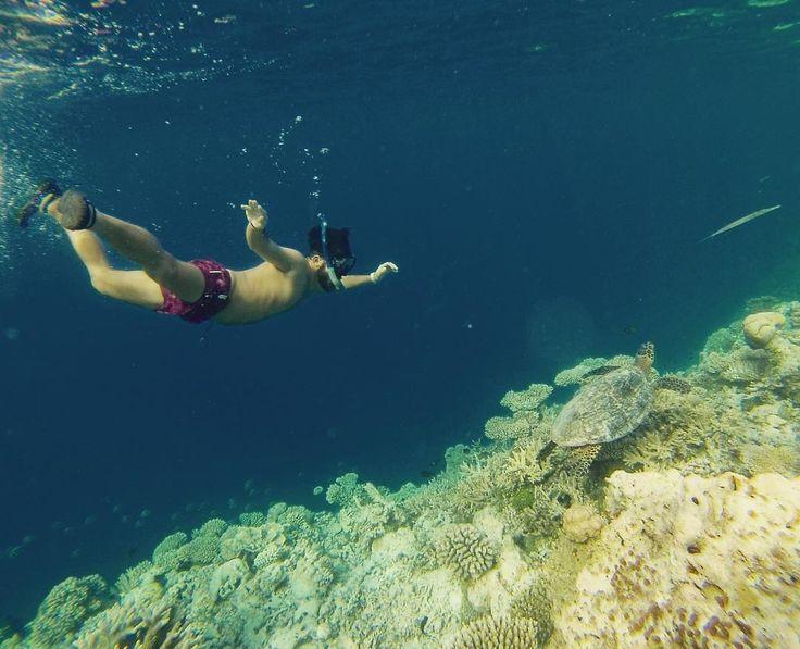 #Maldive #ocean #reef #coral #turtle #me #nature #water #sea #blue #maldivesislands #island #maldives #Vakarufalhi #holiday #gopro #fish #snorkeling #coralli #tartaruga #grandeblue by attiliocorso