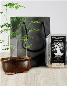 flowers: Grow Your Own Bonsai!