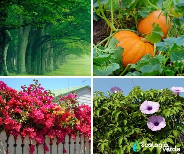 Tipos De Tallos Nombres Características Y Fotos Tipos De Plantas Tallo De La Planta Cuidado De Plantas