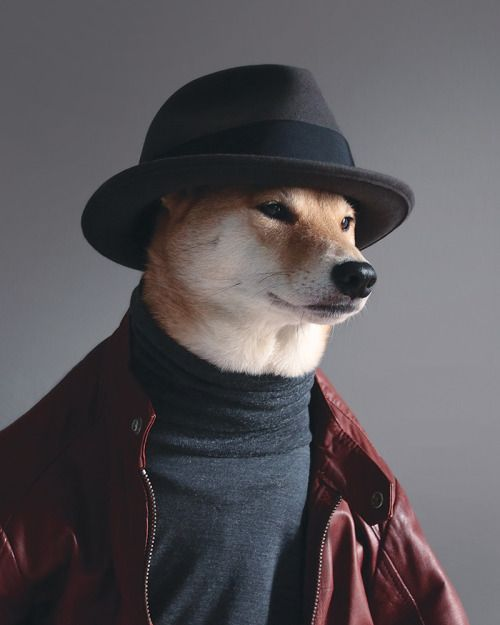 The Menswear Dog | Abduzeedo Design Inspiration