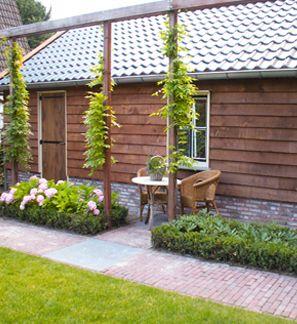 Pergola planten google zoeken beplanting van tuinborders pinterest search and pergolas - Bedekking voor pergola ...