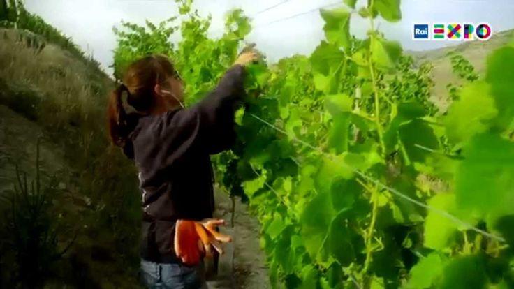 """有多少人力和人才可以回归农业?-在意大利,""""回归土地""""这个话题已经被讨论好几年了。就业危机和失业压力,迫使城市中更多的年轻人寻找自己的新出路:即使是职业农民,直到几年前这个职业仍然还在遭到冷落,被认为是过去的遗产行业。#2015米兰世博##农业##人力##就业#"""