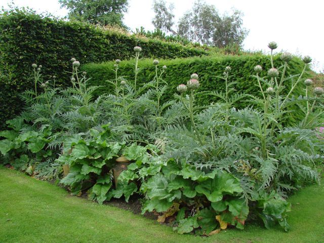 Interesting plant combination: Rhubarb & cardoon or globe artichoke -- I think it would look even better with some tall flowers in the back, cosmos? Maybe with an additional layer of lovage?