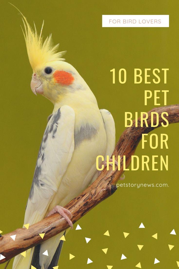 10 Best Pet Birds For Children Animais Bicho De Estimacao