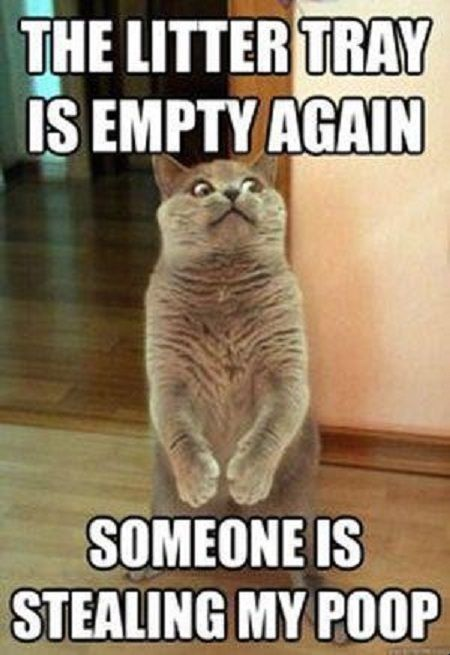Most funny animal memes and humor pics http://quotesnhumor.com/?p=172 hahahahahahahahahahaha SOME ONE GIVE HIM HIS POO BACK :):)::)/):):):):):):):