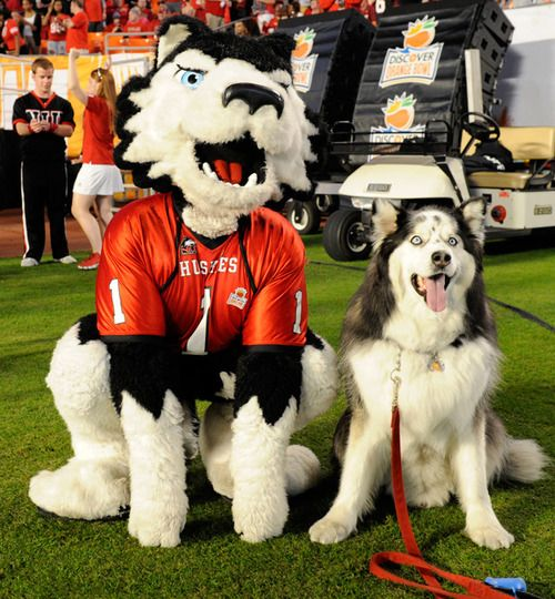 Northern Illinois Huskies mascot Victor E. Huskie poses with a...
