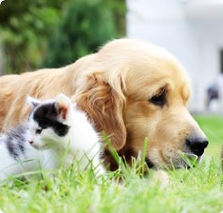 Wholesale pet supplies - Discount Pet supplies - Vet Supplies: Avail Discount pet supplies