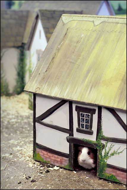 Guinea pig house Jaina SO needs this! I need to find the untreated wood and soy-based paints and have Jason make this for me...