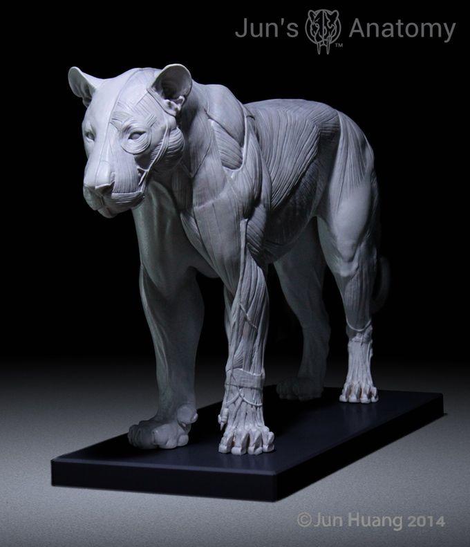Jun's Anatomy Big Cats Anatomy models by Jun Huang — Kickstarter
