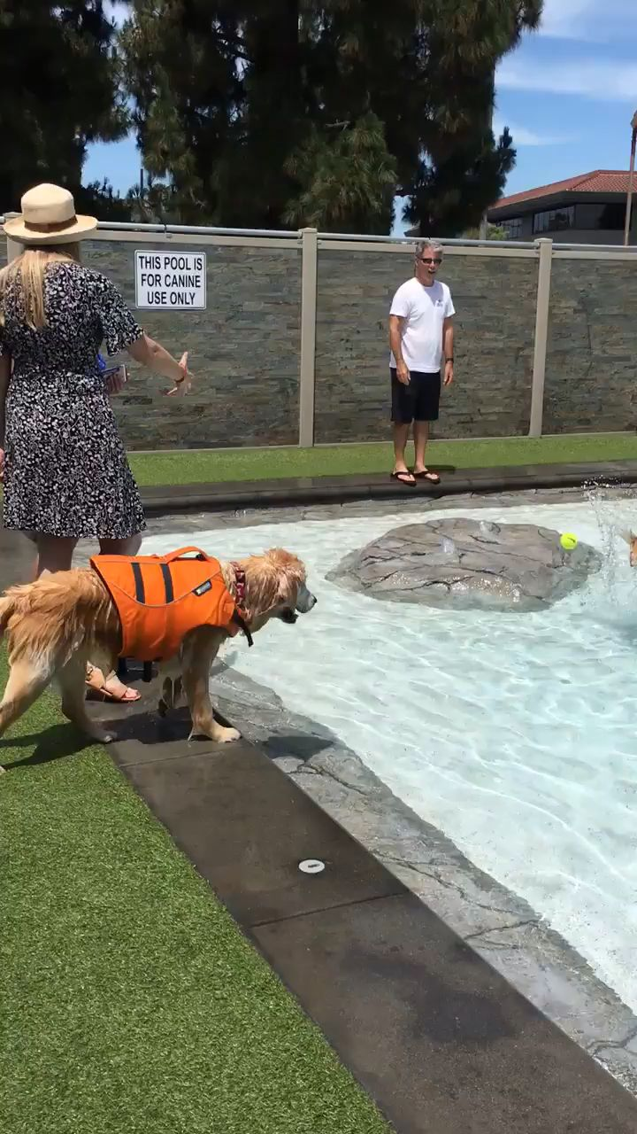 Dogs pool…??!