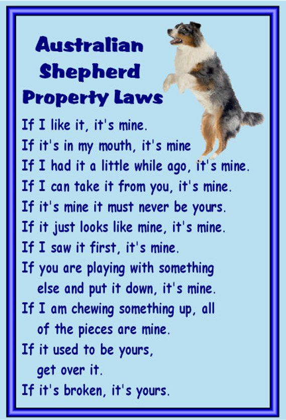 Gifts For Dog Owners Australian Shepherd Fridge Magnet Various