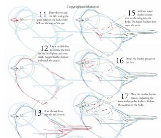 37 best Watercolor Birds tutorials images on Pinterest