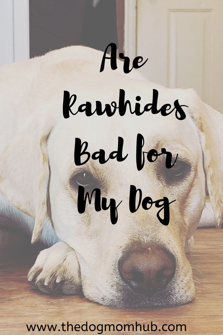 Are Rawhide S Bad For My Dog Dog Mom Dog Safety Dog Health