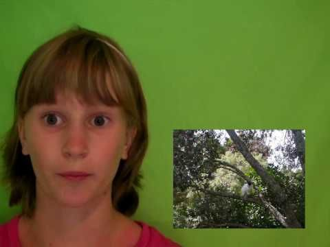 Using green screen on windows movie maker