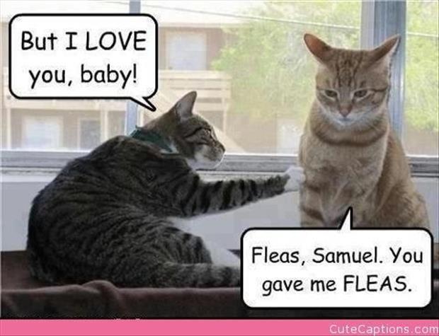 You gave me fleas....