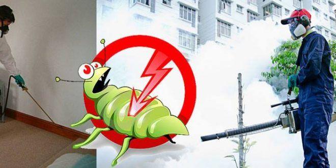 شركة مكافحة الحشرات بجدة Mario Characters Character Fictional Characters