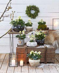 Rund um Pflanzen, Garten, Balkon & Tiere : Dehner Garten Center