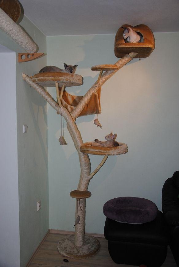 45 best cat enclosures images on pinterest cute kittens cat stuff and dog cat. Black Bedroom Furniture Sets. Home Design Ideas