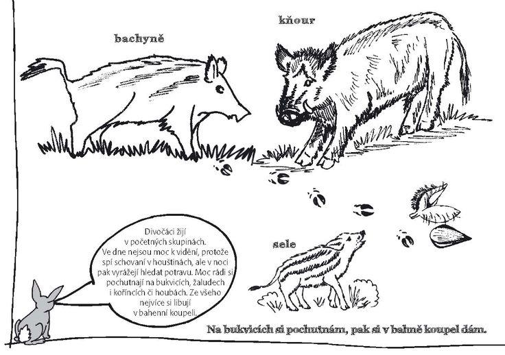 Kdo bydlí v lese - omalovánka A5 :: Hravé Učení s Přírodou