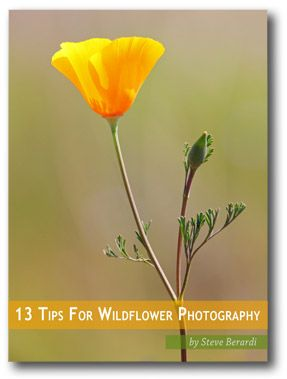 Free eBook on Wildflower Photography BY STEVE BERARDI