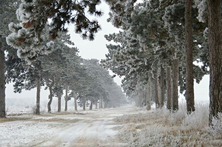 Winter of Balaton