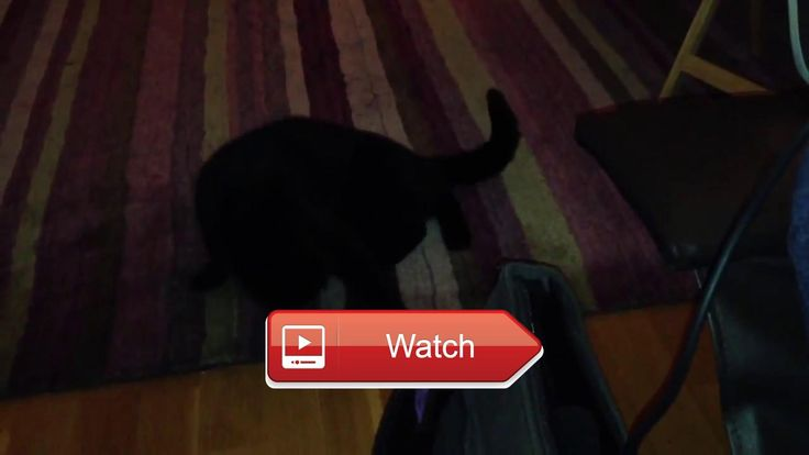 😸 Cute Funny Cats Funniest Cat Videos Stupid Funny Crazy Cats Videos Must Watch 😼 Top FUNNY animals Compilation Funny Cats and Dogs Videos…