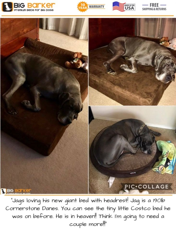 """Customer photo. To get this bed, https://bigbarker.com/  """"Jags loving his new giant bed with headrest! Jag is a 190lb Cornerstone Danes. You can see the tiny little Costco bed he was on before. He is in heaven!! Think I'm going to need a couple more!!!""""  #cornerstonedanes #americanmadedogbeds #dogbedlargebreed #dogbedlivingroom #dogbedluxury"""