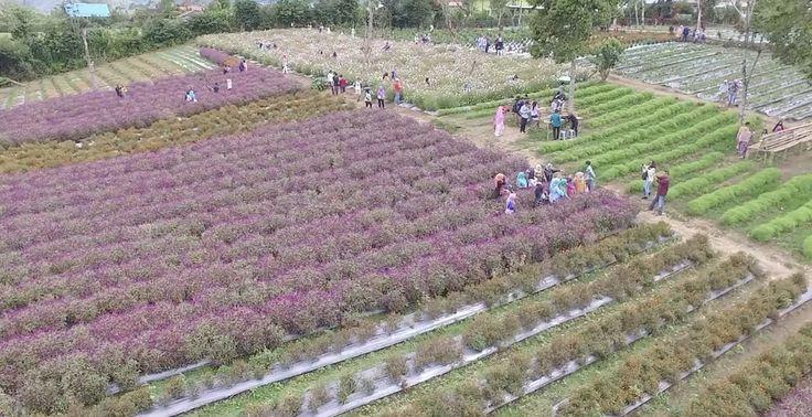 Taman Bunga Beta Agro Destinasi Menarik di Bengkulu - Bengkulu