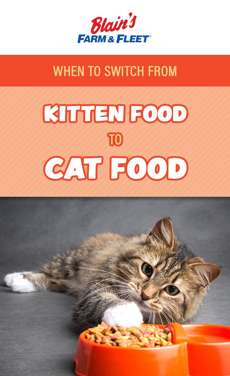 When To Switch From Kitten Food To Cat Food Kitten Food Cat Food Kittens