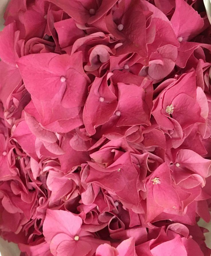 40 Best Hot Pink Images On Pinterest Hot Pink Pink