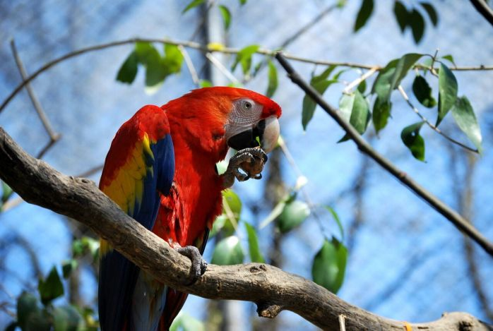 Amazonas, una nuova voliera per gli Ara