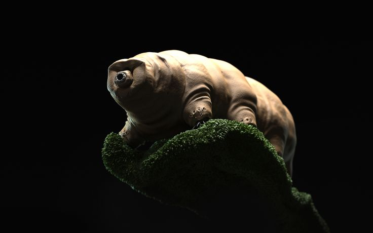 "When I opened few weeks back a National Geographic, I found an amazing shot of this animal. Because of its appearance and what I read about it next, I decided to make my own ""water bear"""