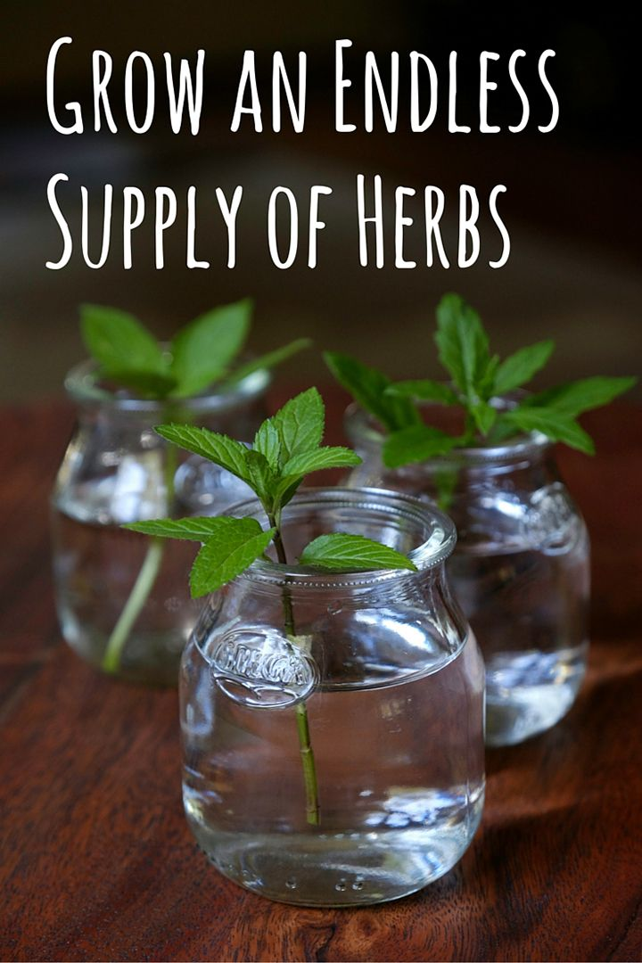 Grow herbs from cuttings