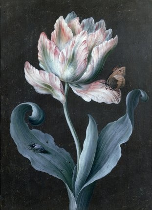 Tulipa (parrot) with Butterfly & Beetle by Barbara Regina Dietzsch, ca.1750–1759. Gouache