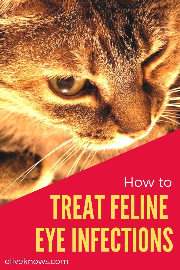 How To Treat Feline Eye Infections Cat Medication Cat Parenting Eye Infections