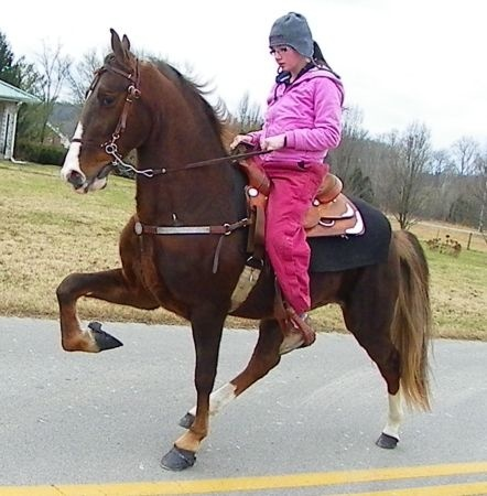 REG TWH SOMETHING SPECIAL ** - $909 (Science Hill, KY)
