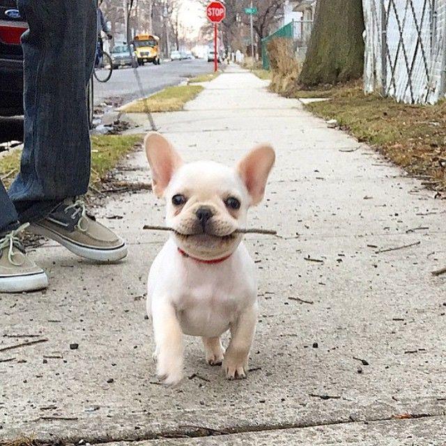 Batpig & Me Secadora Se • Sólo tomando mi bastón de paseo! Cortesía de ...