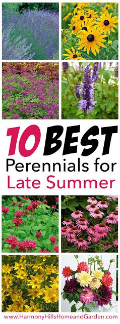 10 Best Perennials for Late Summer - So many great plants to last all through the hot summer months - click now or re-pin for later! - www.HarmonyHillsHomeandGarden.com