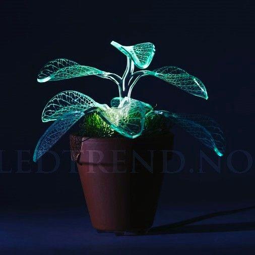 Lampe formet som en plante med LED-lys unikt kult og en klassiker i stuen din.  #lampe #uniklampe #lamper #belysningsdesign #belysning #ledlampe  #ledtrend  #gavetips #pynt #tilfest #interiør #tilhuset #tilhagen #hagefest #pynt #husgave #partypynt #partyplanner #interiørdetaljer #interior #hus #hytta #hagestue