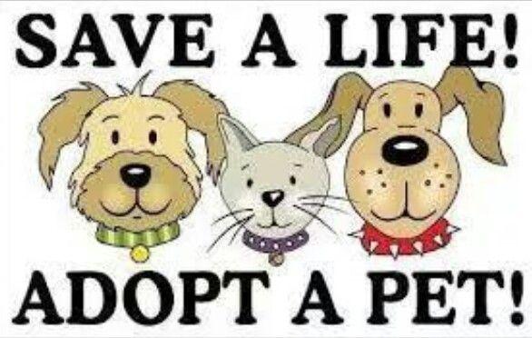 Adopteer een hond
